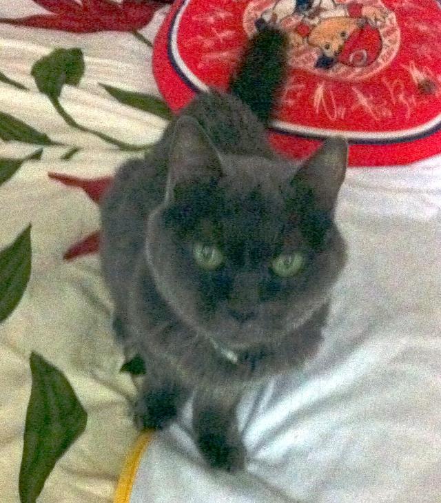 腎不全になってスナック「まる」を開店したアイドル猫まるですニャ
