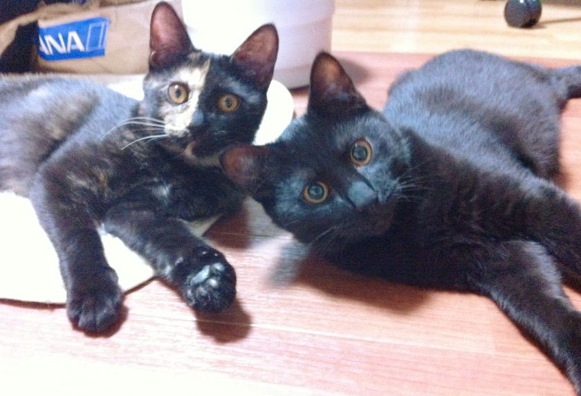 こんな可愛い顔した猫たちがお尻から瓜実条虫とは…