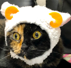 さび猫エル
