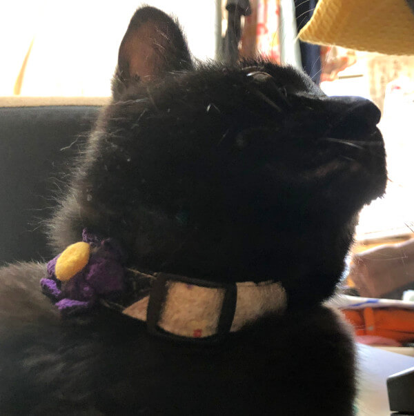 黒猫康太の頬
